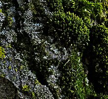 Moss on Tree by Lynn Armstrong