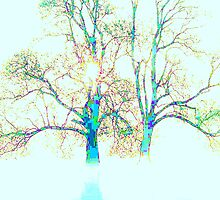 "'MY TREE'S OF LOVE AND LIGHT"" by Norma-jean Morrison"