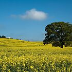 Stranded in a Sea of Yellow by David Dean