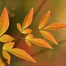 leaves by Iris Mackenzie