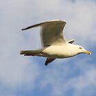 Gliding by Dave Godden