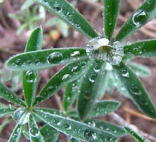 Wet Mountains Dew by Bill Hendricks