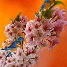 Blue birds by Hal Smith