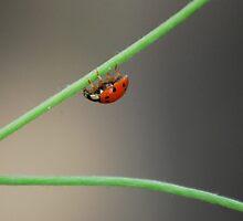 Ladybug 2 by Laura Kalcheff