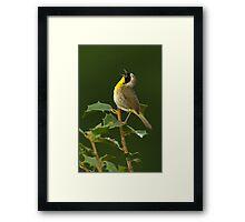 Singing Common Yellowthroat Framed Print