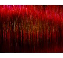 striation Photographic Print