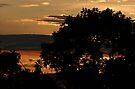 Tree Silhoette in Sunset by Jan  Tribe