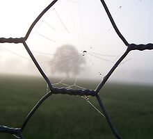 Western Dsitrict Spiderweb in Fence by Cathy McAdie