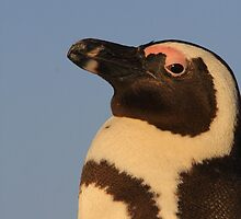 African Penguin by ChrisCoombes