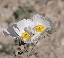 Desert Flowers by Roz Fayette