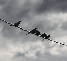 Dove Silhouettes by Roz Fayette
