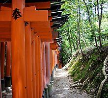 Red torii at Fushimi Inari shrine by flungabunga