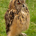 Long Eared Owl by John Thurgood