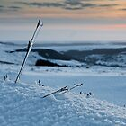 The Bleak Mid-Moor Winter Frozen Life  by Fatboy
