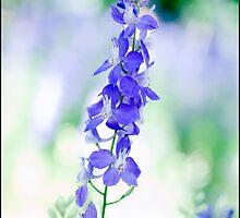 Blue May Flower 01 by freakinout