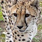 Cheetah Mugshot by jermesky