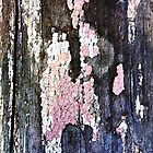 Peeling Pink Paint by Virginia Daniels