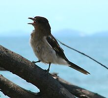 Juvenile Butcher Bird by elsha