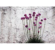 Urban garden Photographic Print