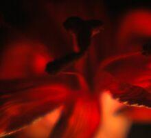 Red Lily II by Terri-Anne Kingsley