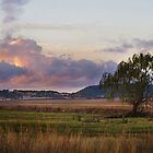 Willowtree - Felton Valley, Darling Downs, Qld by Lorraine Seipel