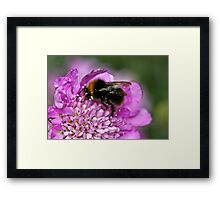 Early bumble bee Framed Print