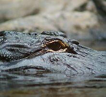 aligator by imacropus