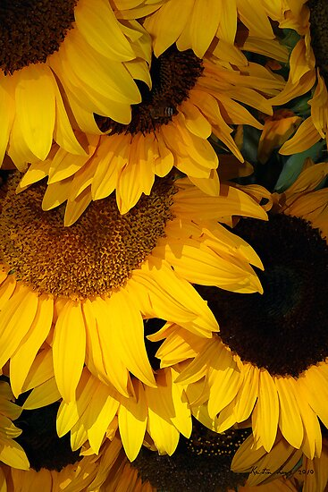Sunflowers from the Farmers Market by Kristin  Long