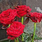 Roses in Munich by David J Dionne