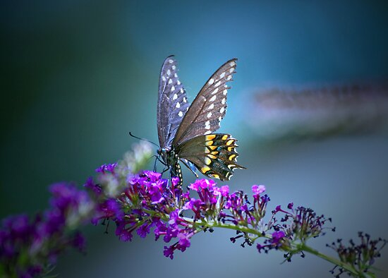 A butterfly&#x27;s calling me . . . by Bonnie T.  Barry