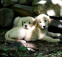 Sundappled Puppies - 10 by goldnzrule