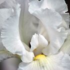 White Iris by Joanne  Bradley