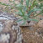 Sonoran Gopher Snake by Bluecornstudios