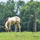 A Buckskin Colt by Jeff Ore