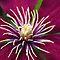 Flower in Macro (A PORTION of a FLOWER)