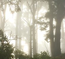 Foggy morning at Tilden, Berkeley, California by Soumya Mitra