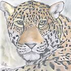 Panthera Pardus by Peter Allton