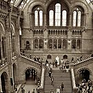 London Natural History Museum by iLaw