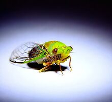 spanish fly by adouglas