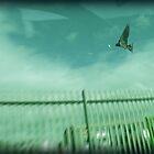 Fly Away by Gavin Wilson