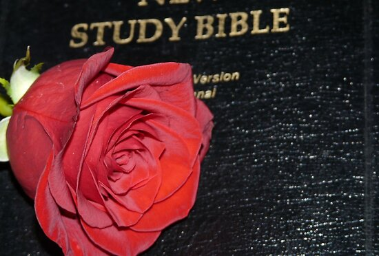 A Rose And The Bible by MaeBelle