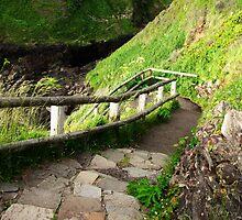 Cape Perpetua Walking Path....well worth it...Oregon Coast by trueblvr
