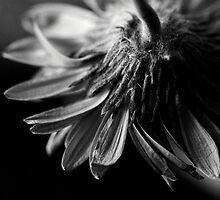 Dying by Greg Webb