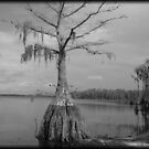 Tree in Lake Louisa, FL by Debbie Robbins