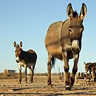 A Burro's Curiousity is Never Satisfied by Corri Gryting Gutzman