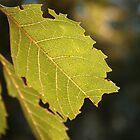 Leaf by digisenj
