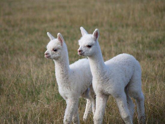 Alpaca Twin by mensoart