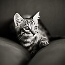 Tiger Kitten - Curiosity by cabrilphoto