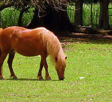 Mini-Pony by L.D. Bonner