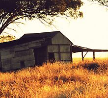 Shed at Sunrise, Rutherglen, Victoria, Australia by Georgina James